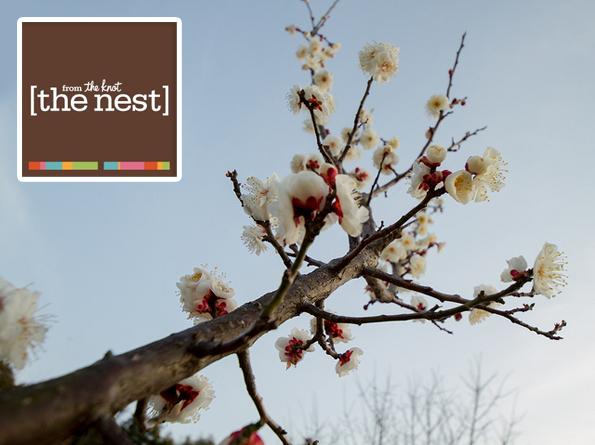 The Nest on Unbucket